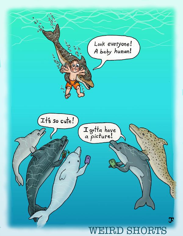 Dolphin Selfie(ish)